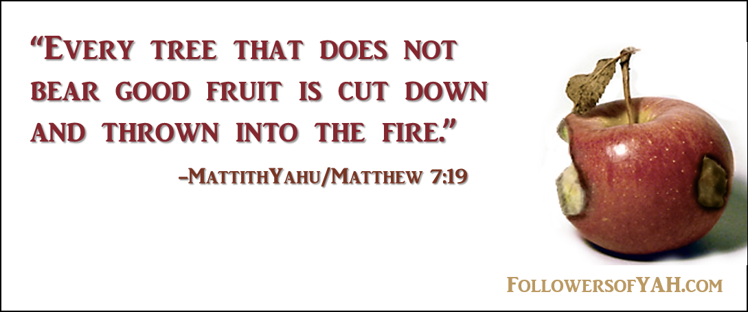 """Every tree that does not bear good fruit is cut down and thrown into the fire."""