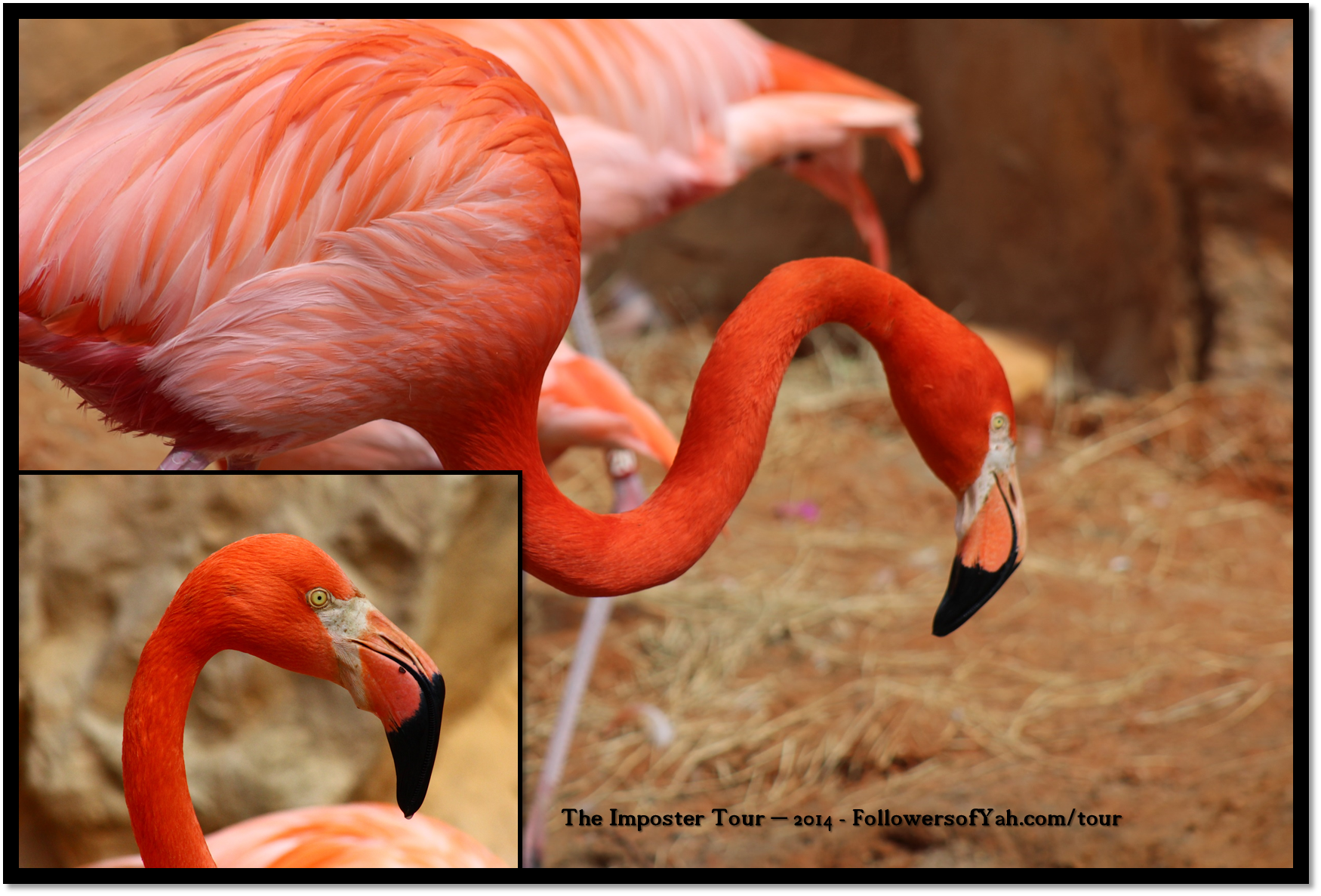 pink-flamingo